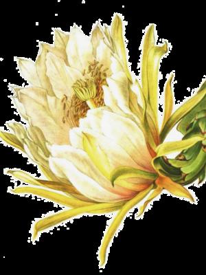 LMB_Cactus5b2